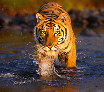 Golden Triangle With Ranthambore Tour from Delhi